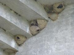 mud nest