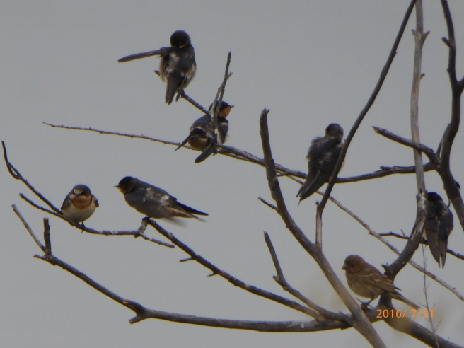 CLIFF SWALLOWS discussing upcoming trip