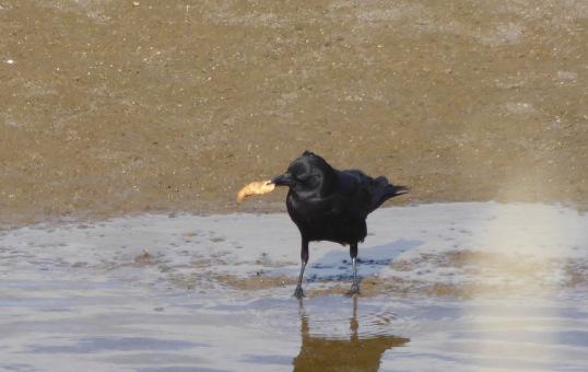 crow & croissant 1