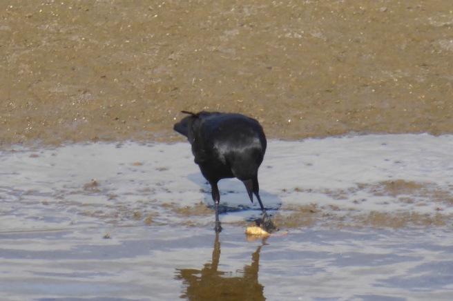 crow & croissant 2