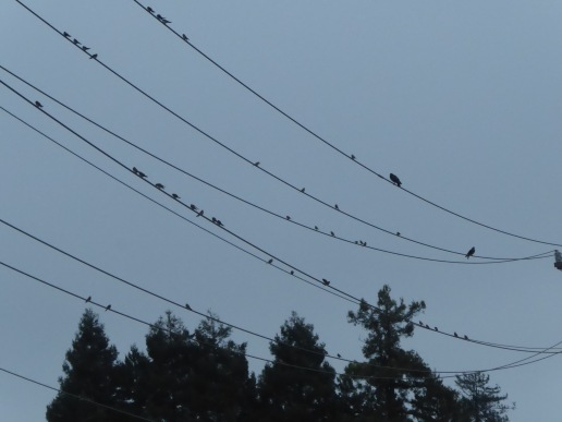 Swallow Congregation
