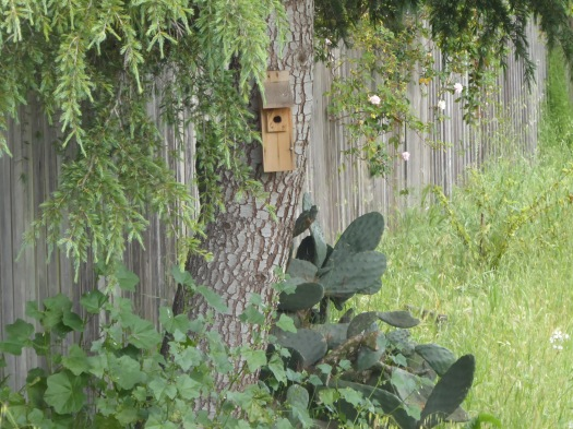 Chickadee Box